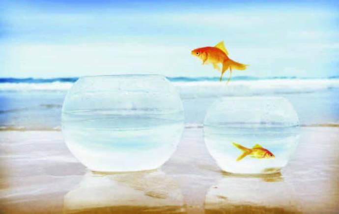 fish-jump-01